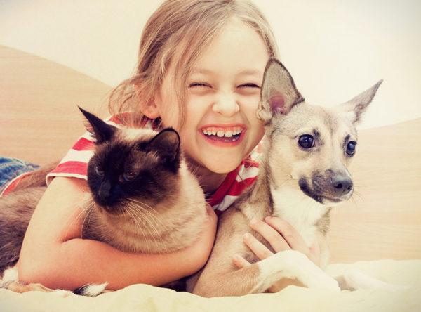 centro animal mascotas perros gatos