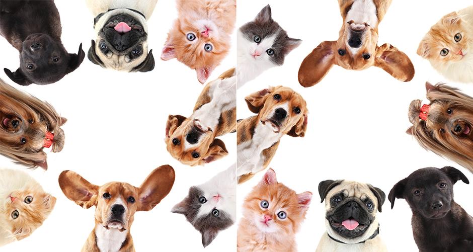 centro animal mascotas