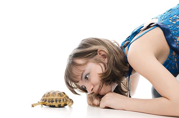 centro animal tortuga mascota